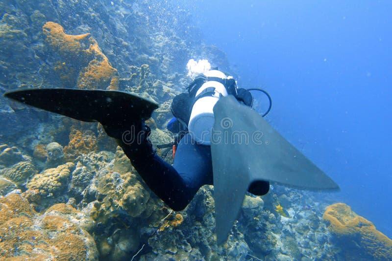 Mergulhador de mergulhador no oceano fotografia de stock