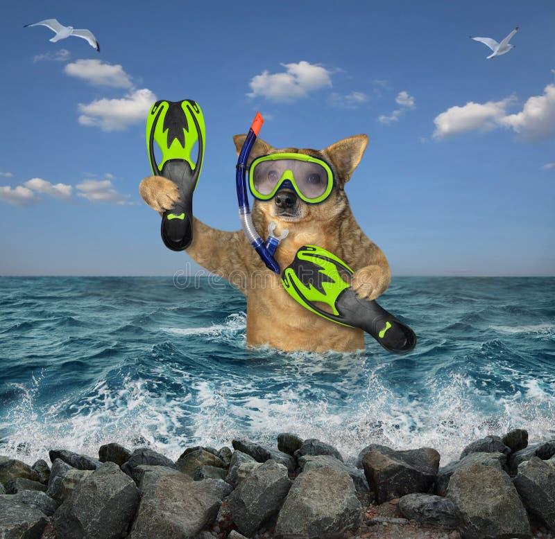 Mergulhador do cão no mar fotografia de stock royalty free