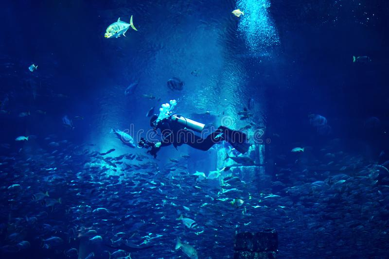 Mergulhador do homem que mergulha no fundo místico azul com peixes fotografia de stock