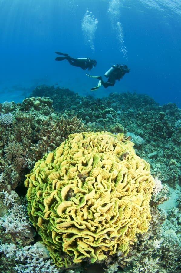 Mergulhador do mergulhador com coral amarelo imagem de stock royalty free