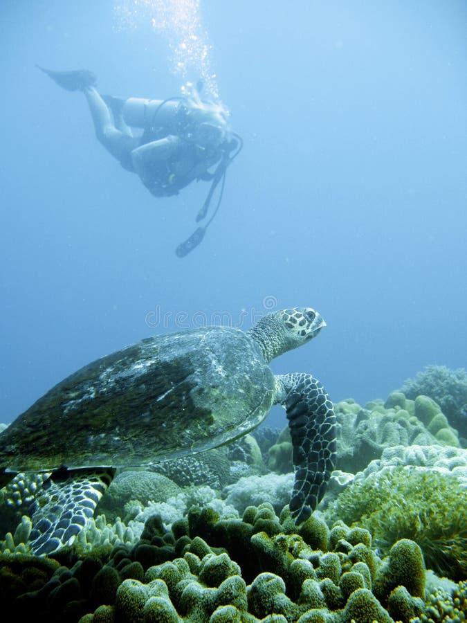 Mergulhador do mergulhador e tartaruga de mar verde fotografia de stock royalty free