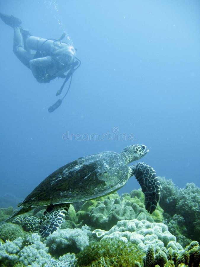Mergulhador do mergulhador e tartaruga de mar verde foto de stock royalty free