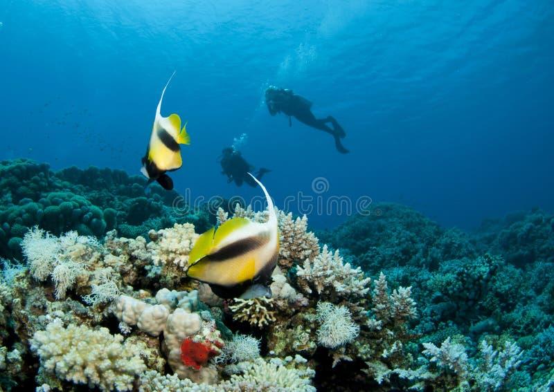 Mergulhador do mergulhador mostrado em silhueta com bannerfish foto de stock
