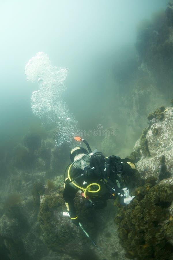 Mergulhador do mergulhador no mar de japão fotos de stock royalty free