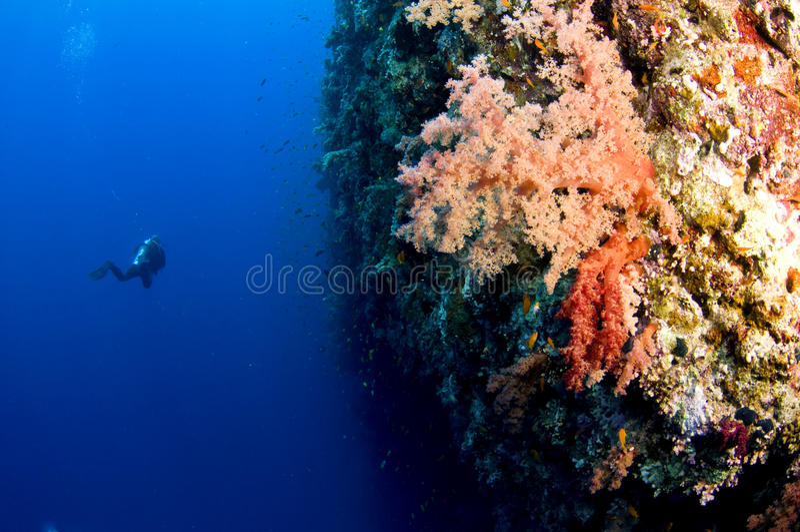 Mergulhador do mergulhador no recife do tubarão foto de stock royalty free