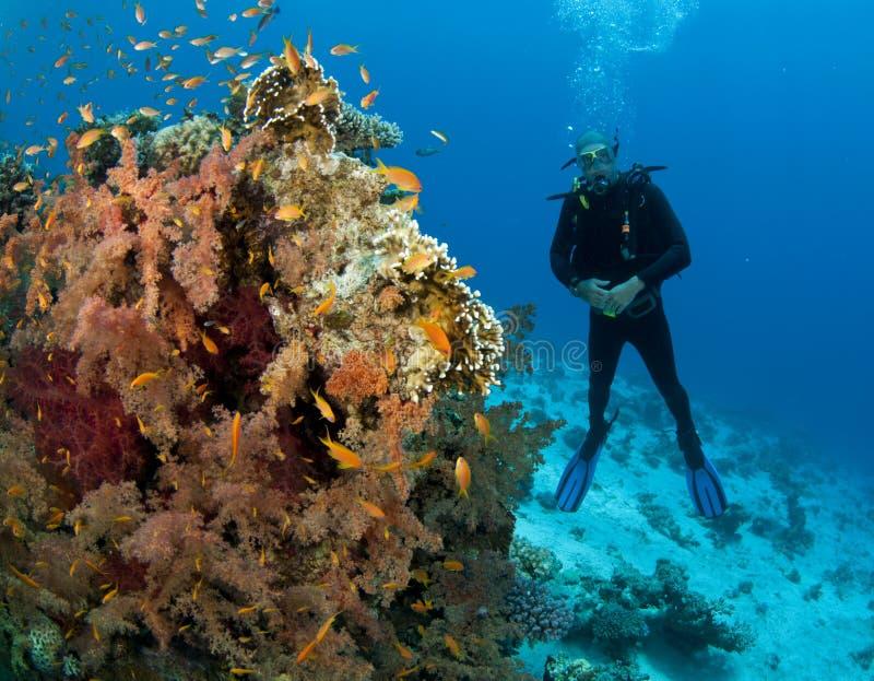 Mergulhador do mergulhador perto do coral macio imagem de stock