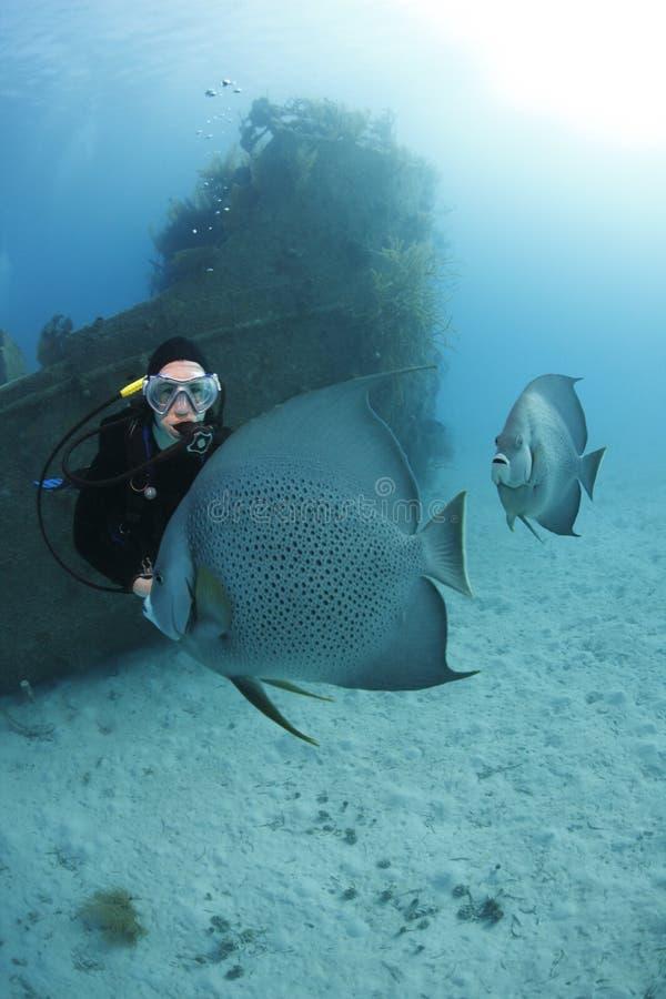 Mergulhador do mergulhador que admira o Angelfish cinzento fotos de stock royalty free