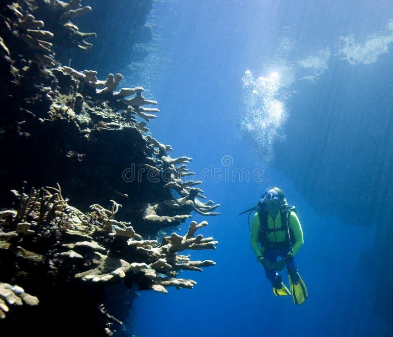 Mergulhador do mergulhador que olha o coral foto de stock royalty free