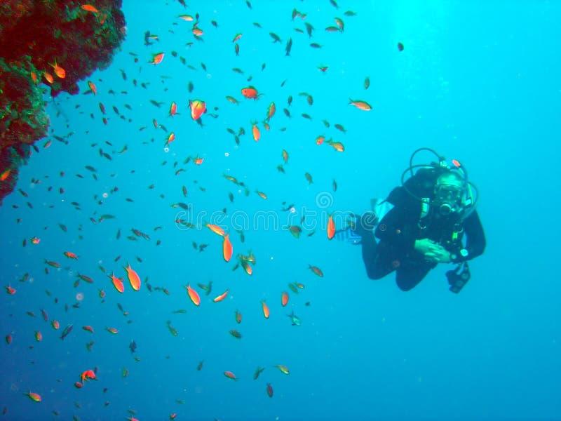 Mergulhador e coral imagem de stock royalty free