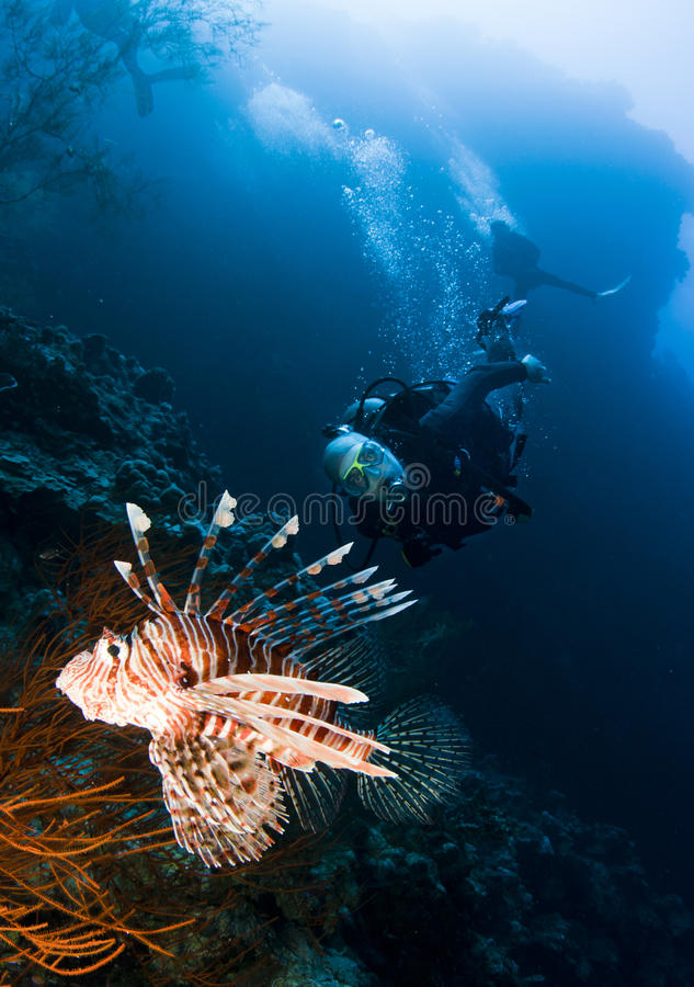 Mergulhador e lionfish do mergulhador fotos de stock