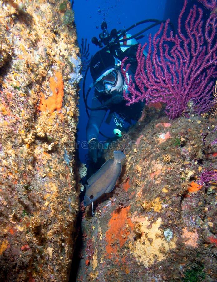 Mergulhador e peixes imagem de stock