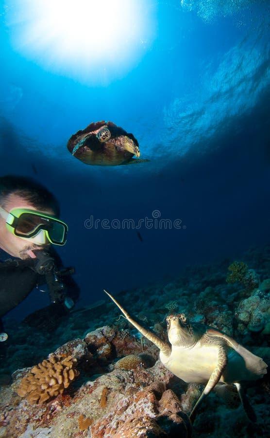 Mergulhador e tartarugas fotos de stock