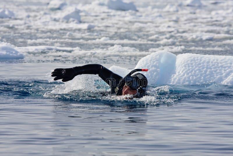 Mergulhador entre o gelo fotografia de stock