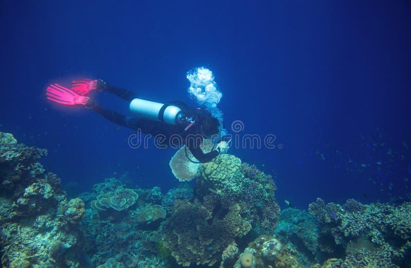 Mergulhador no mar azul Equipamento de mergulho no curso de água aberta Instrutor de PADI no mar imagens de stock royalty free