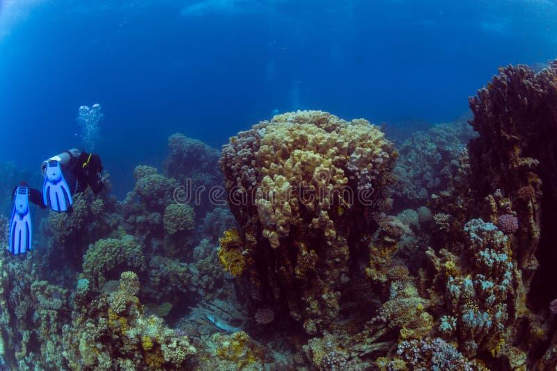 Mergulhador no reaf imagem de stock royalty free