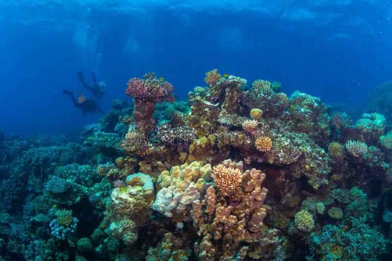 Mergulhador no reaf fotografia de stock royalty free