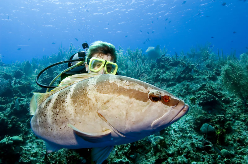 Mergulhador que interage com a garoupa fotografia de stock