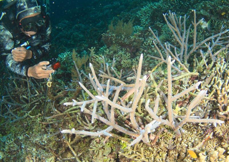 Mergulhador que toma fotos do coral de staghorn foto de stock