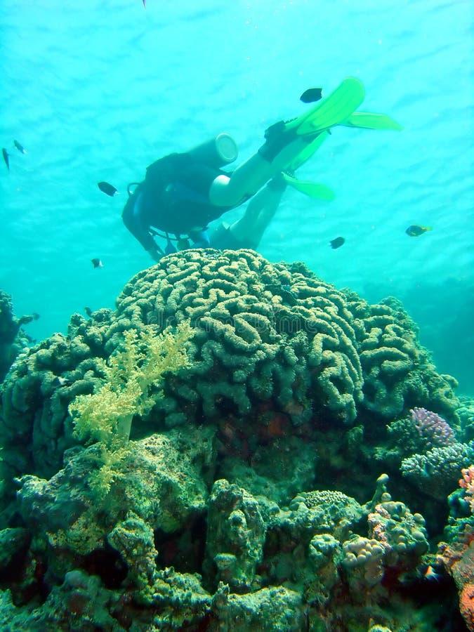 Mergulhador sobre o coral imagem de stock