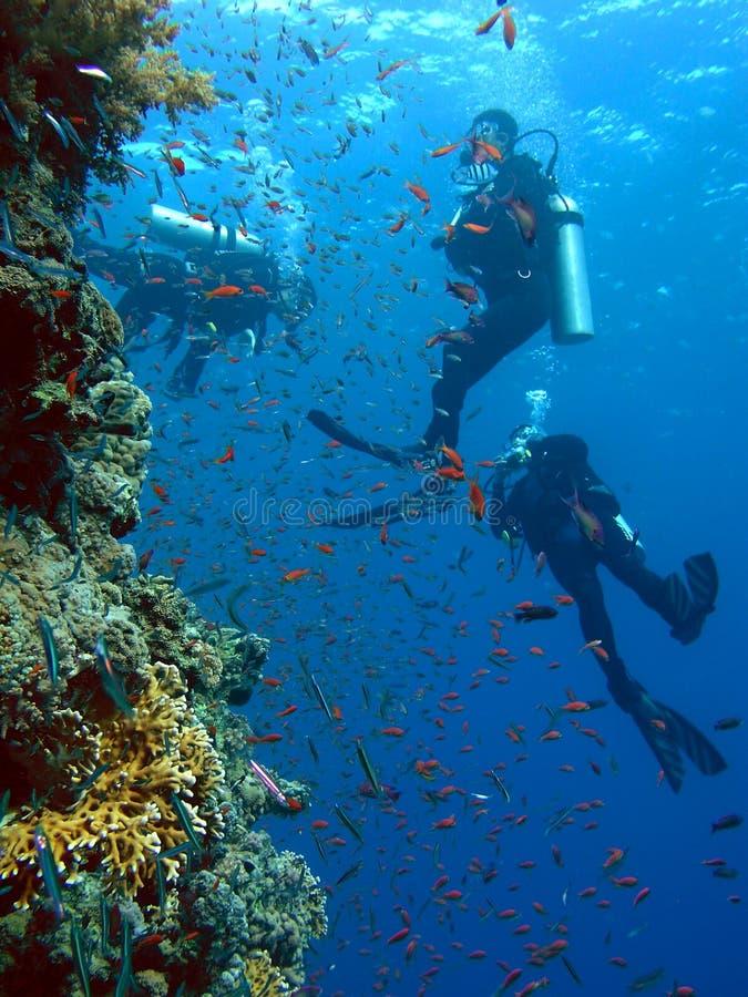 Mergulhadores imagem de stock