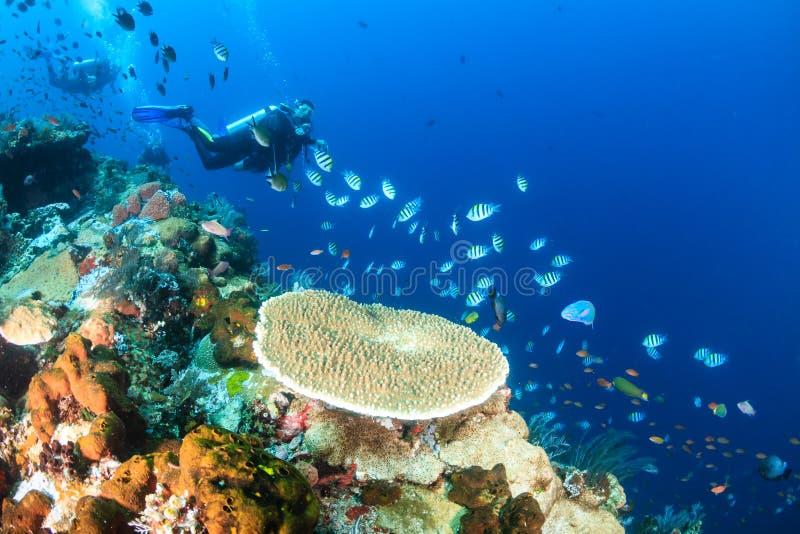 Mergulhadores de MERGULHADOR em um recife de corais tropical fotografia de stock