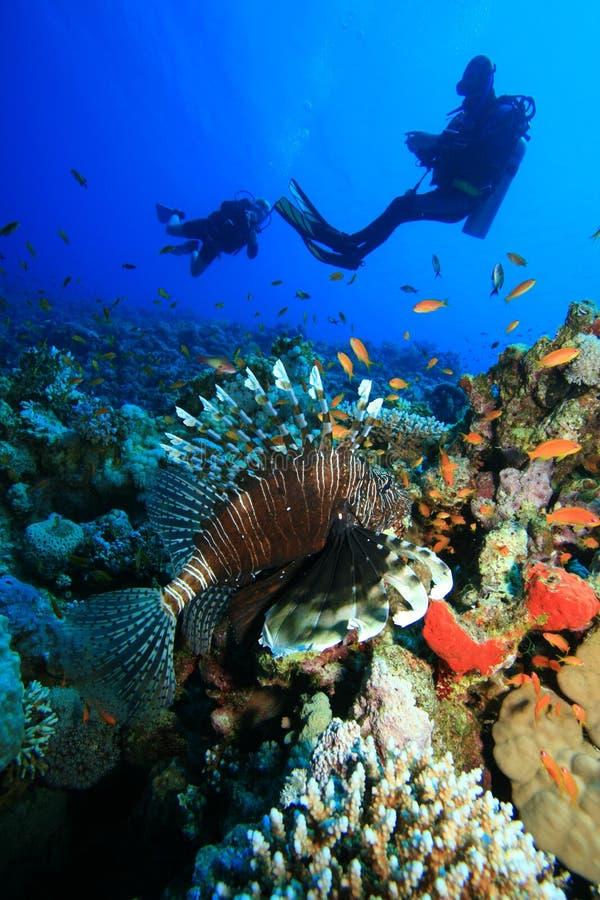 Mergulhadores do Lionfish e do mergulhador foto de stock