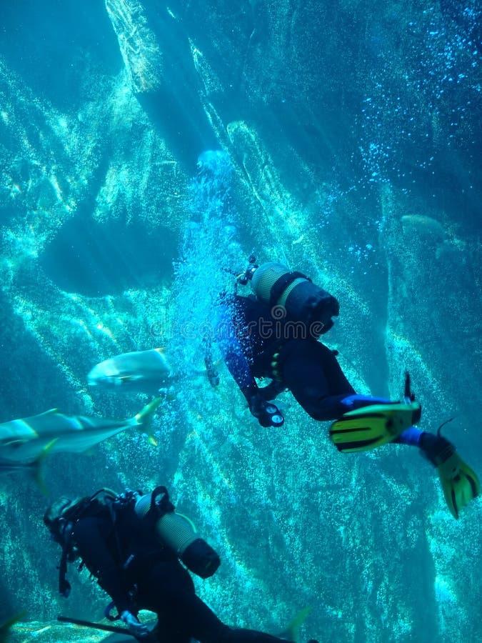 Mergulhadores do mergulhador foto de stock royalty free