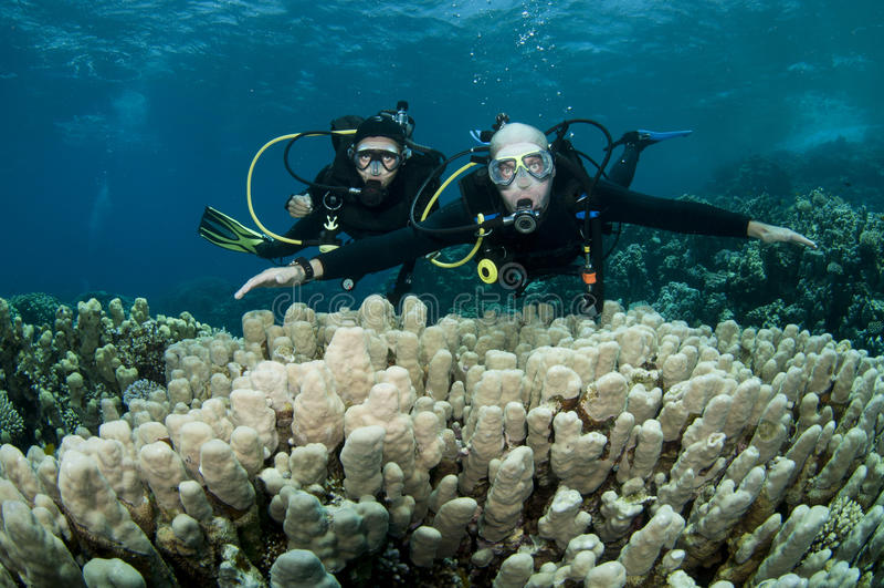 Mergulhadores do mergulhador imagem de stock royalty free