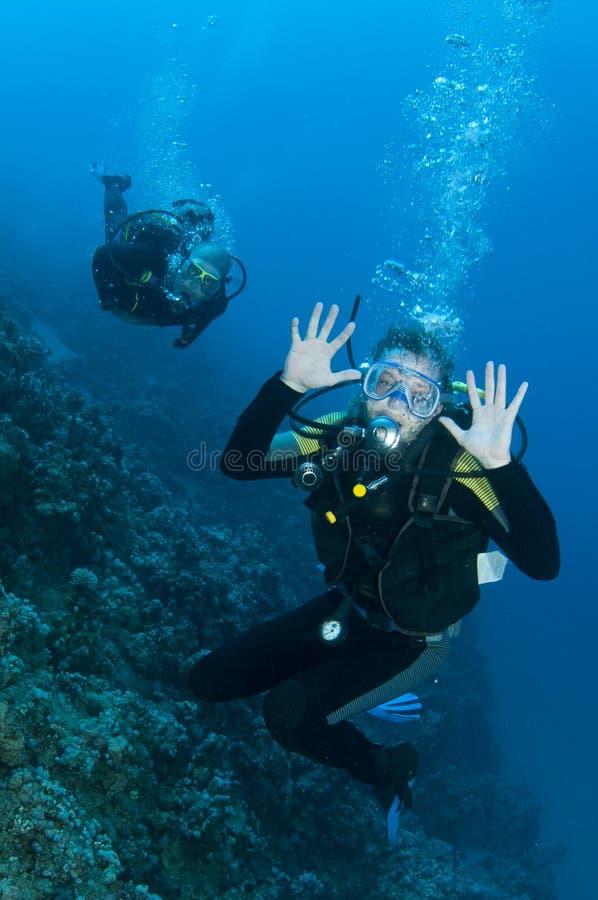 Mergulhadores do mergulhador que têm o divertimento em um mergulho foto de stock