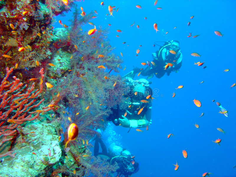 Mergulhadores e coral foto de stock royalty free