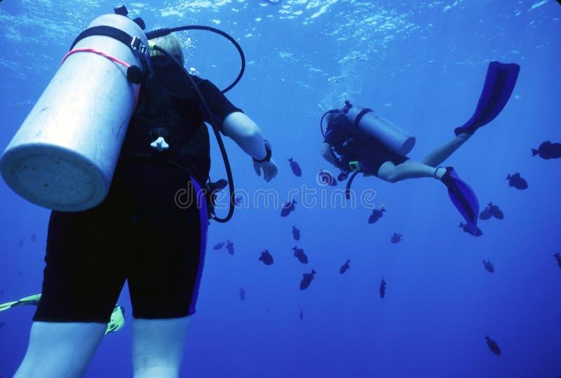 Mergulhadores e Durgons imagem de stock