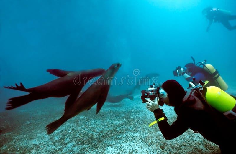 Mergulhadores e leões de mar de Galápagos imagens de stock