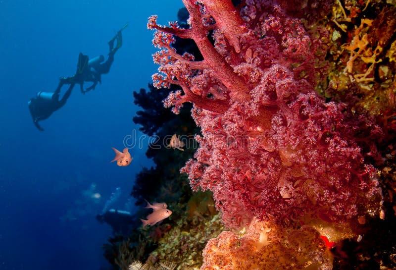 Mergulhadores e recife coral fotos de stock royalty free