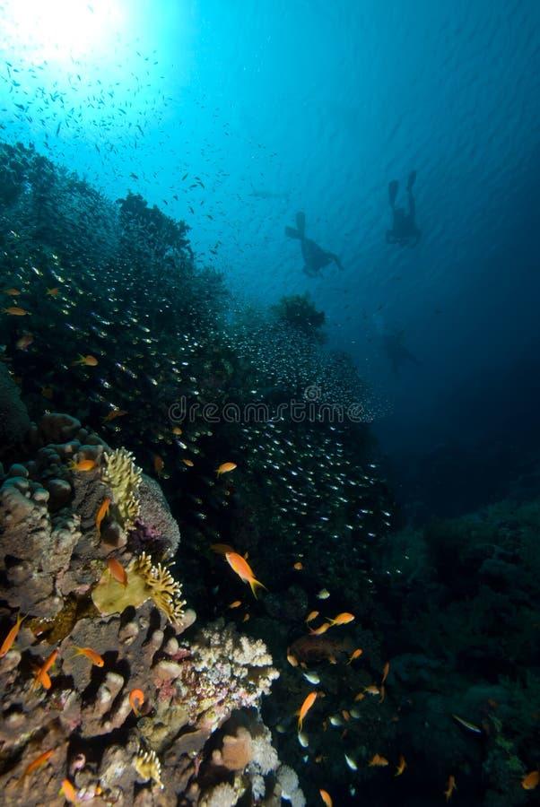 Mergulhadores sobre um recife coral imagens de stock