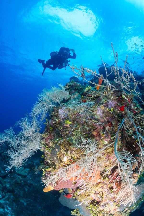 Mergulhadores técnicos em um recife de corais tropical profundo foto de stock
