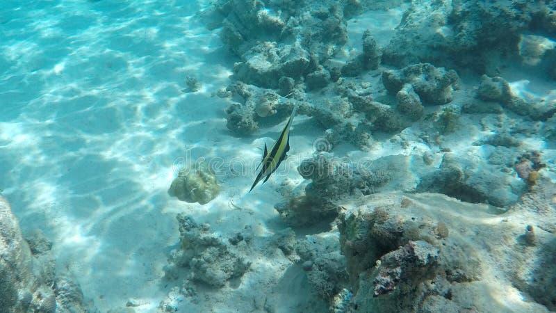 Mergulhando, ilha de Mnemba imagem de stock royalty free