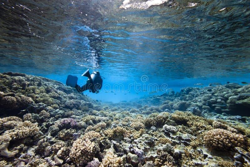 Mergulho autónomo e coral fotos de stock royalty free