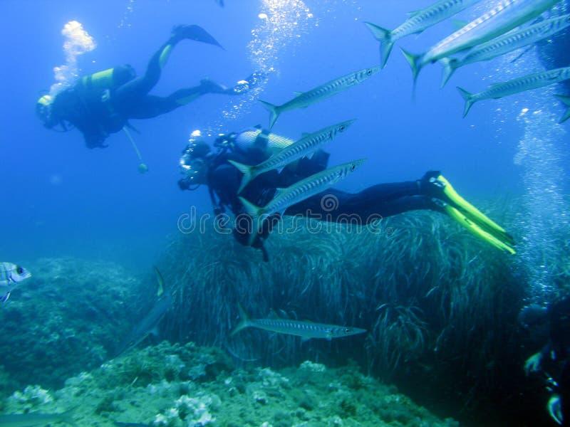 Mergulhadores e barracudas foto de stock royalty free