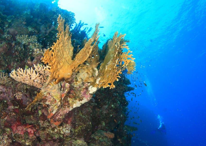 Mergulho do mergulhador pelo recife de corais imagens de stock
