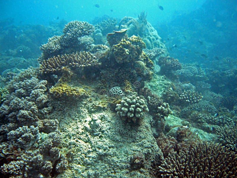 Mergulho em Zanzibar imagens de stock