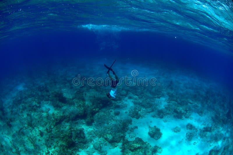 Mergulho livre do homem e pesca da lança fotografia de stock