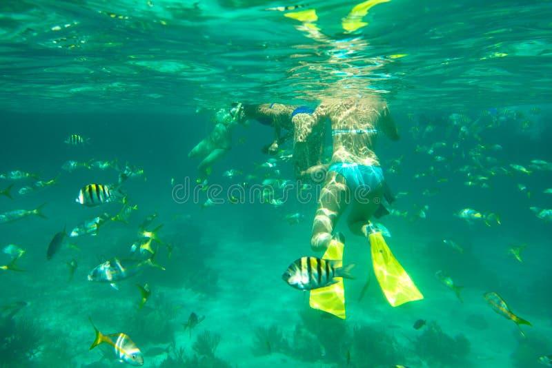 Mergulho no mar do Cararibe fotografia de stock royalty free