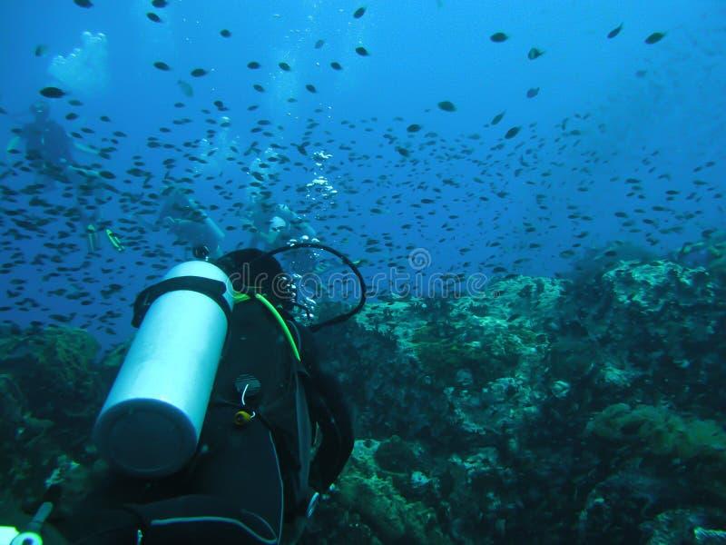 Mergulho no oceano Mergulhador da silhueta do mergulhador imagem de stock