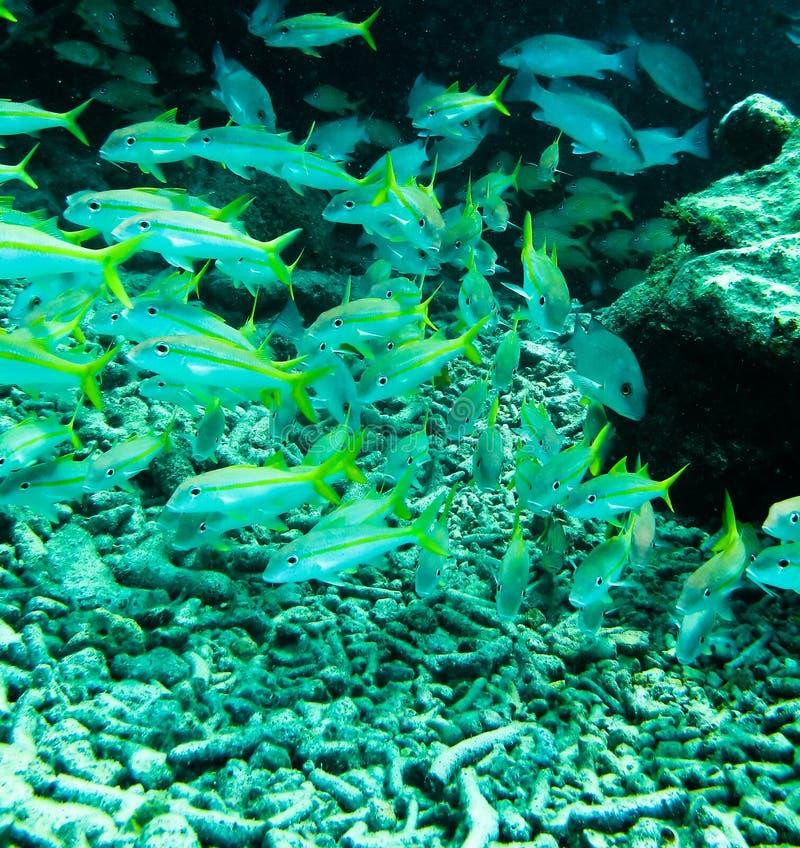Mergulhos do mergulhador fotos de stock royalty free