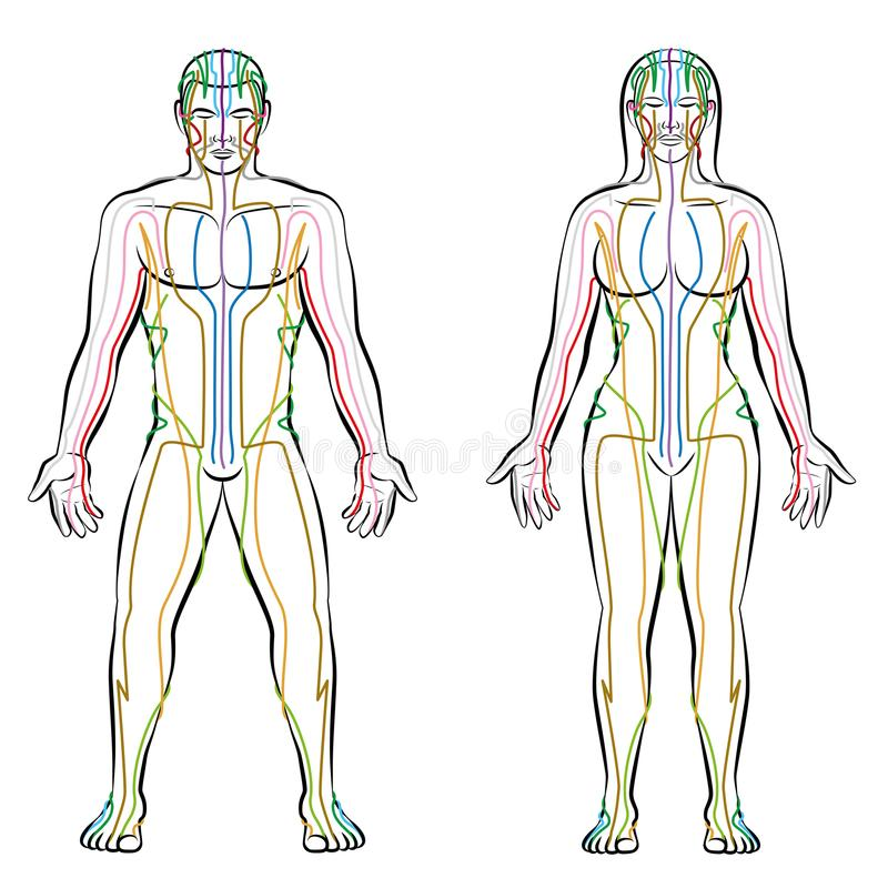 Meridian System Male Female Body Colored Meridians royalty free illustration