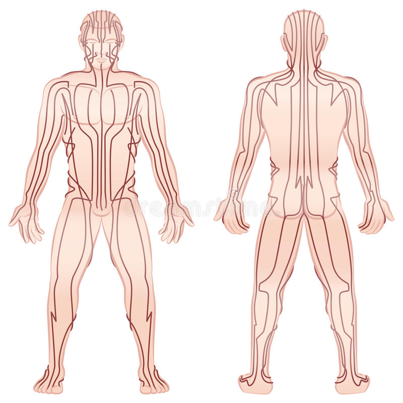 Meridians Male Body TCM stock illustration