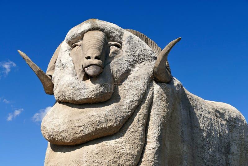 Merino gigante Ram Australlia fotografia de stock royalty free