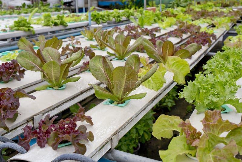 Merket hidropônico orgânico de Tailândia do jardim vegetal fotografia de stock
