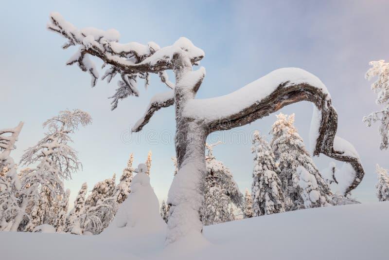 Merkwürdig geformter toter Baum stockfoto