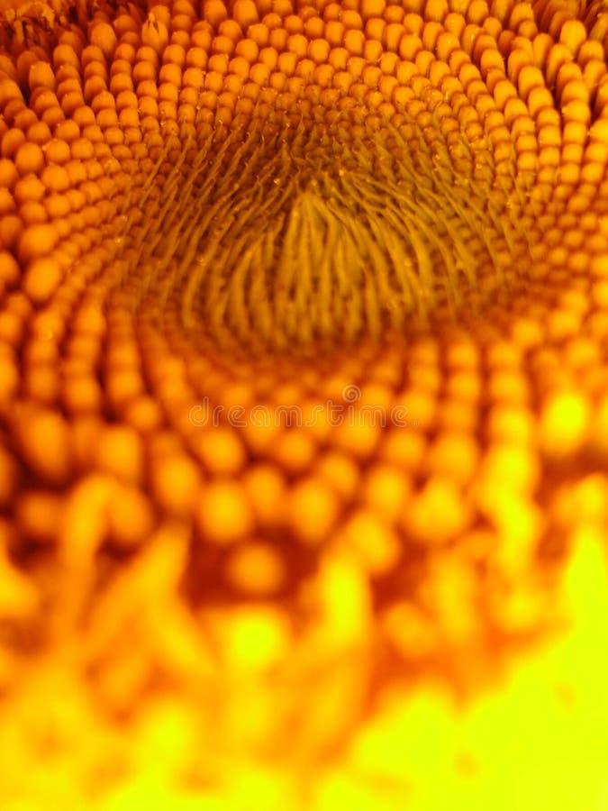 Merkwürdige Sonnenblume stockfoto